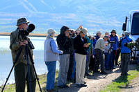 Great Salt Lake Bird Festival 2013