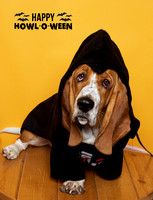 Camp Bow Wow 2017 Howl-o-ween